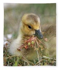 Baby Gosling Collecting Flowers Fleece Blanket
