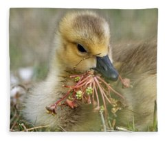 Baby Gosling Collecting Flowers Fleece Blanket