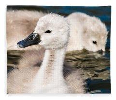 Baby Swan Close Up Fleece Blanket