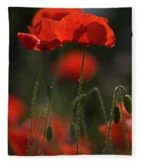 Backlit Poppies Fleece Blanket