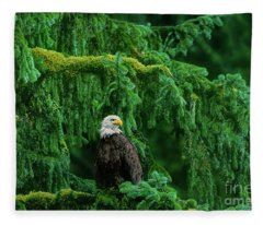 Bald Eagle In Temperate Rainforest Alaska Endangered Species Fleece Blanket