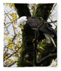 Bald Eagle In The Fall Fleece Blanket