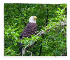 Bald Eagle In Tree Fleece Blanket