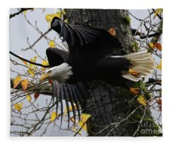 Bald Eagle Takes Flight Fleece Blanket