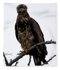 Bald Eagle - The Stare Fleece Blanket