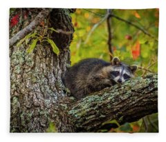 Bandit #2 Nap Time Fleece Blanket