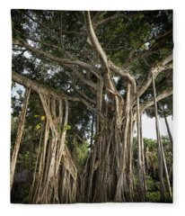 Banyan Tree At Bonnet House Fleece Blanket