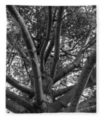 Bare Tree Fleece Blanket