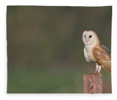 Barn Owl On Post Fleece Blanket
