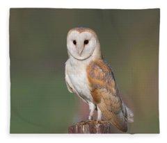 Barn Owl Perched Fleece Blanket