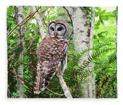 Barred Owl Hunting In Alder Forest Fleece Blanket