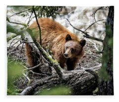 Bear In Trees Fleece Blanket