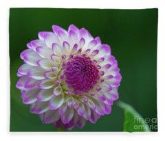 Beautiful Dahlia 2 Fleece Blanket