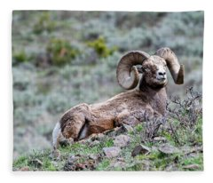 Big Horn Sheep #2 Fleece Blanket