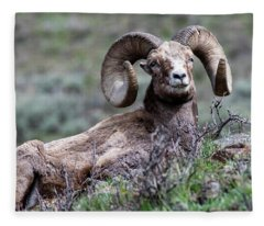Big Horn Sheep #3 Fleece Blanket
