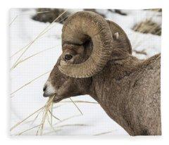 Big Horn Snacking In The Snow Fleece Blanket