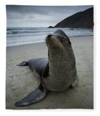 Big Seal Fleece Blanket
