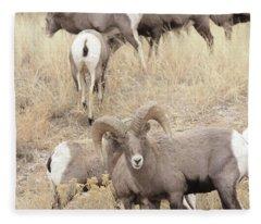 Bighorn6 Fleece Blanket