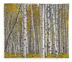 Birch Tree Grove With A Touch Of Yellow Color Fleece Blanket