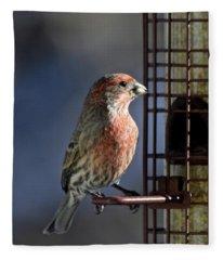 Bird Feeding In The Afternoon Sun Fleece Blanket