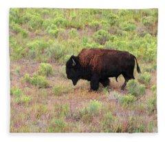 Bison1 Fleece Blanket