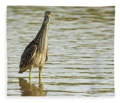 Black-crowned Night Heron Juvenile 1984-112017-1cr Fleece Blanket