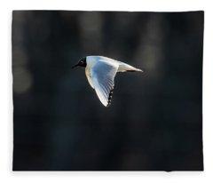 Black-headed Gull Flying In The Sun Fleece Blanket