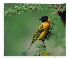 Black-headed Weaver Fleece Blanket