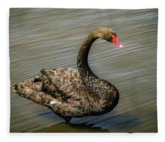 Black Swan Fleece Blanket
