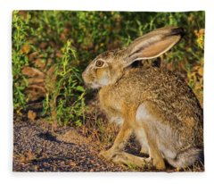 Black-tailed Jackrabbit Fleece Blanket