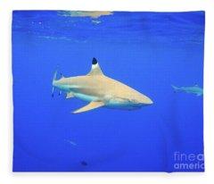 Blacktip Reef Shark Fleece Blanket