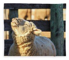 Bleating Sheep Fleece Blanket