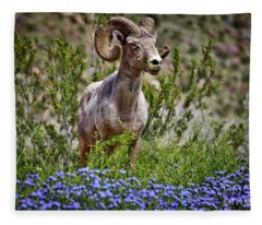 Blooms And Bighorn In Anza Borrego Desert State Park  Fleece Blanket