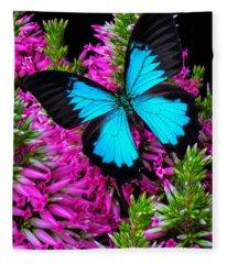 Blue Butterfly On Heather Fleece Blanket