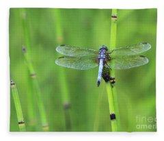 Blue Dasher Fleece Blanket