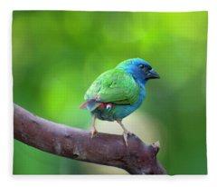 Blue-faced Parrotfinch Fleece Blanket