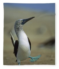 Blue-footed Booby Sula Nebouxii Fleece Blanket