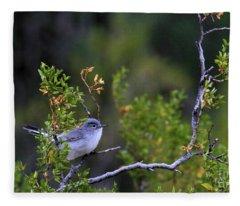 Blue-gray Gnatcatcher  Fleece Blanket