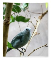 Blue-grey Tanager 2 Fleece Blanket
