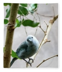 Blue-grey Tanager Fleece Blanket