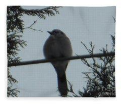 Blue Jay On Wire Fleece Blanket