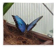 Blue Life Butterfly Fleece Blanket