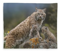 Bobcat Mother And Kittens North America Fleece Blanket