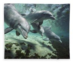 Four Bottlenose Dolphins Hawaii Fleece Blanket