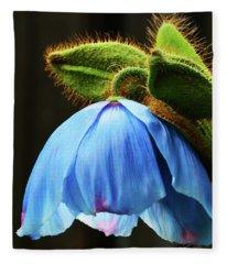 Bowing Blue Poppy Fleece Blanket