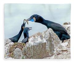 Brandt's Cormorant Feeding Family Fleece Blanket