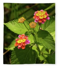 Bright Cluster Of Lantana Flowers Fleece Blanket
