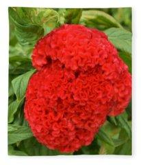 Bright Red Cockscomb Fleece Blanket
