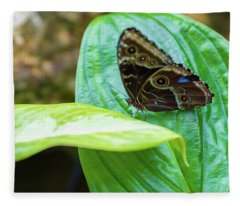Brown And Blue Butterfly Fleece Blanket