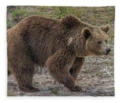 Brown Bear 6 Fleece Blanket